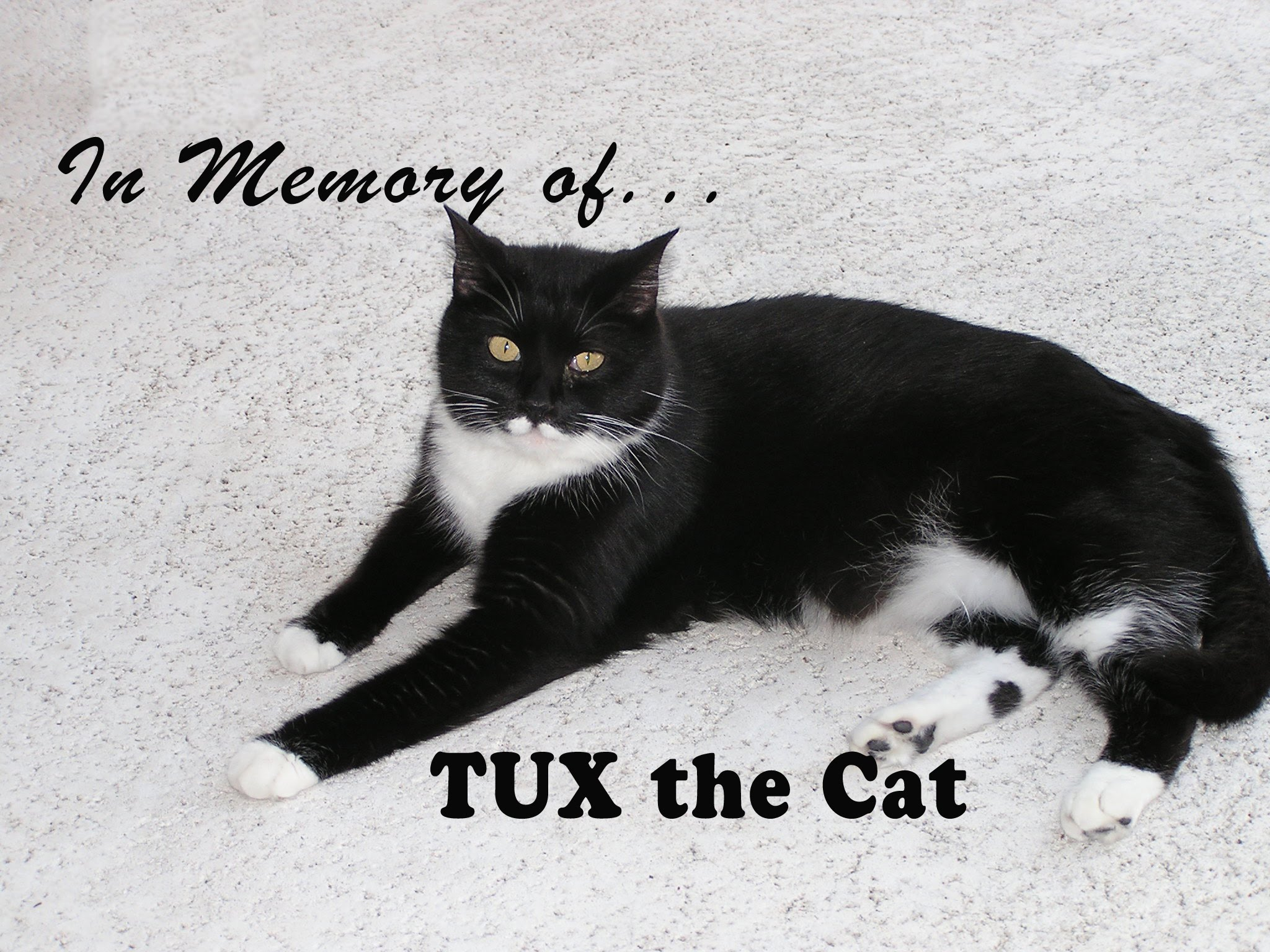 In Memory of Tux the Cat…