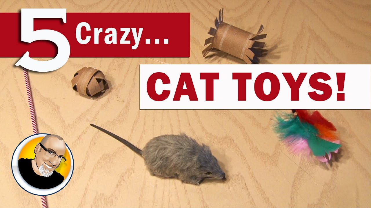 5 Crazy Cat Toys You Can Make!